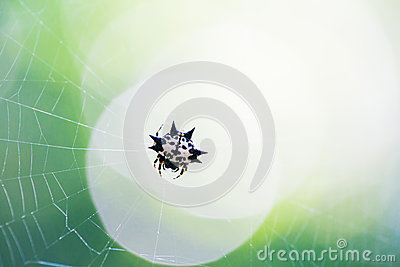 Little Spider on the web