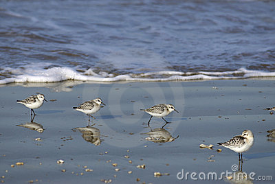 Little stints at the seaside