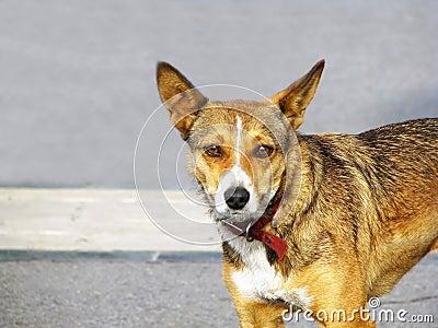 Little street dog