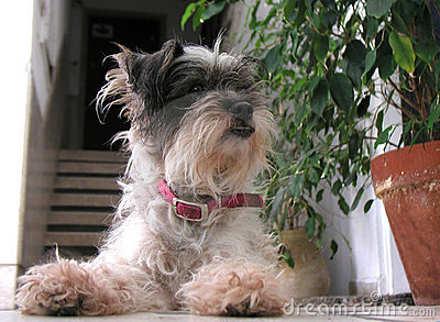 Little terrier dog
