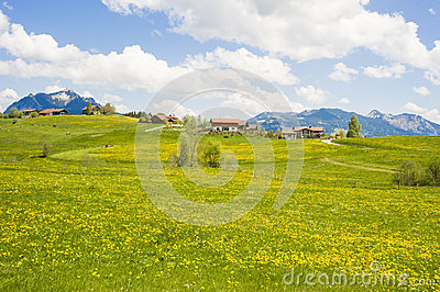 Little village in Germany with blooming meadow