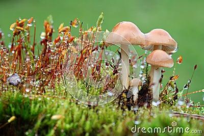 Little wet mushrooms