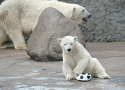 Little White Polar Bear With Ball Stock Photo - Image: 15122810