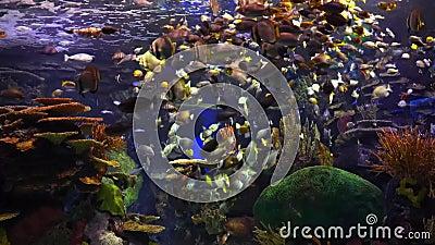 Liv av fisken stock video