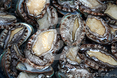 Live Abalones