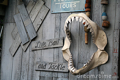 Live Bait and Tackle