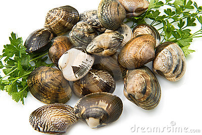 Live clams