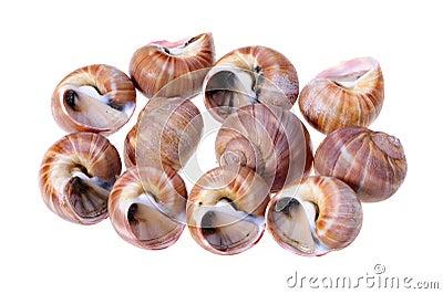 Live conch