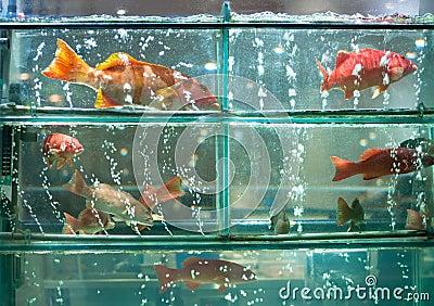 Live Coral Fish