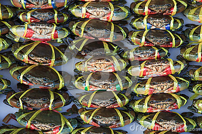 Live crabs ready to be cooked in a market