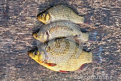 Freshwater carp - photo#24