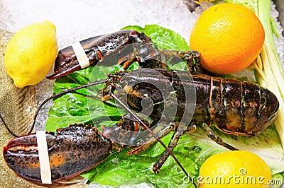 Live lobster on market display