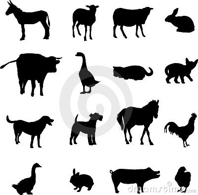 Free Livestock And Poultry Royalty Free Stock Photography - 9438947