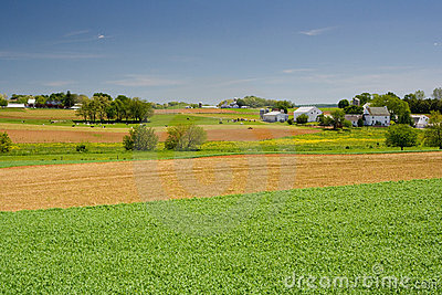 Livestock Farm in Pennsylvania