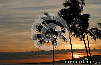 Livlig hawaiansk solnedgång