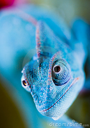 Free Lizard Royalty Free Stock Images - 4585319