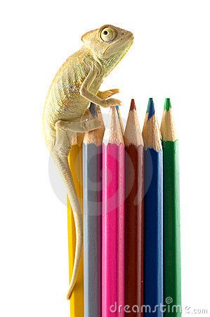 Free Lizard And Color Pencils. Royalty Free Stock Image - 4768326