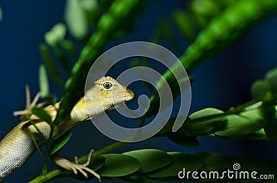 Lizard in green nature
