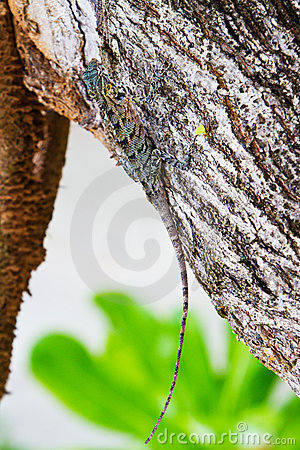 Lizard hiding on the trunk