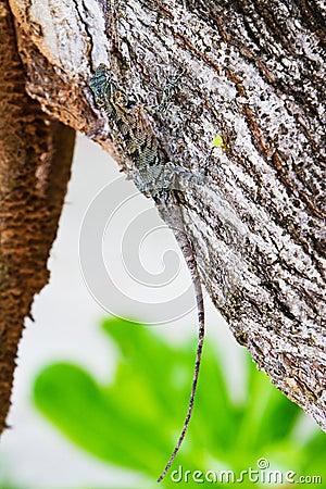 Lizard hiding on the trunk