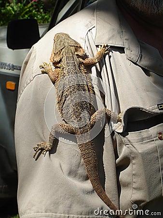 Lizard Hitching a Ride