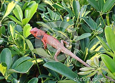 Lizard among leaf