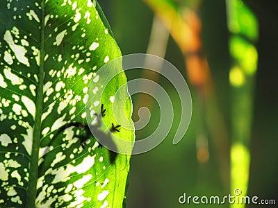 Lizard on leaf rainforest silhouette
