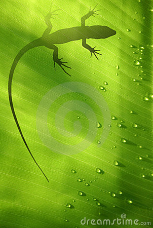 Free Lizard On Leaf Stock Photo - 1509720