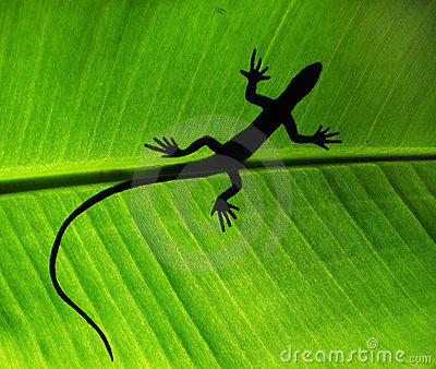Lizard shadow