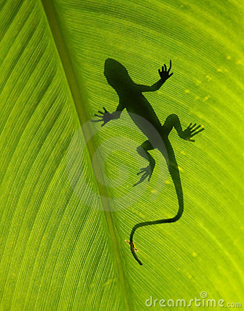 Free Lizard Silhouette Stock Images - 1556014