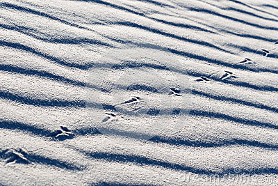 Lizard Tracks on White Sands
