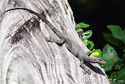 A lizard at a tree
