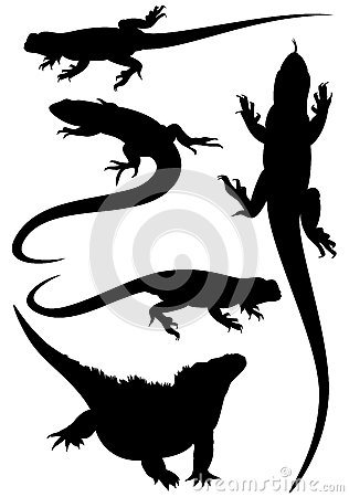 Free Lizard Vector Silhouettes Royalty Free Stock Image - 30153456