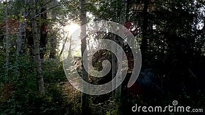 Ljus och mörk skugga i fantasi-skog med gyllene ljus stock video