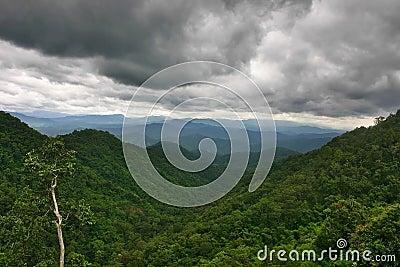 Lluvia sobre la selva tropical