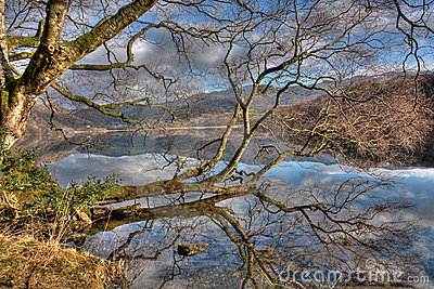 Llyn Dinas reflections