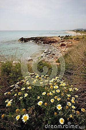 Línea de la playa de Menorcan