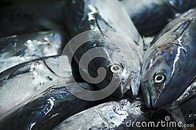 Lång svantonfisk