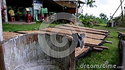 Lo scarabeo sedeva sul bambù video d archivio