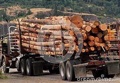 Load of cut logs
