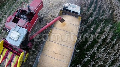 Loading corn into the truck stock footage