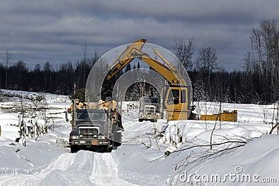 Loading spruce trees onto logging truck