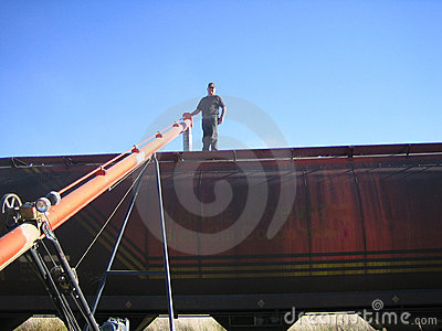 Loading wheat into railcar