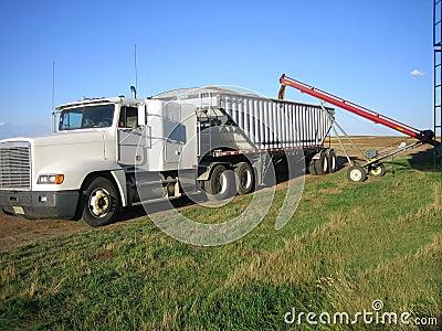 Loading wheat into trucks