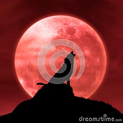 Lobo que grita en la luna en la medianoche