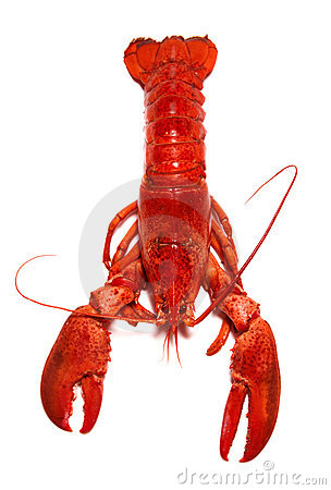 Free Lobster Royalty Free Stock Image - 17034786