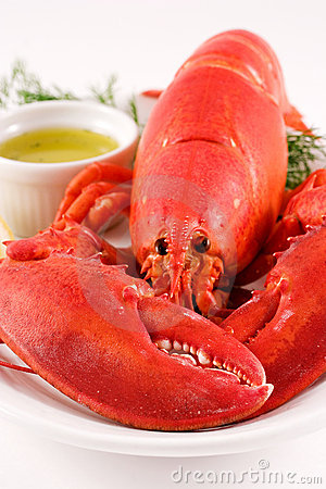 Free Lobster Stock Image - 844501