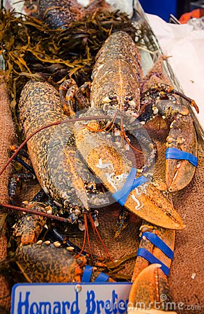 Free Lobster On The Fish Market Stock Images - 109541874