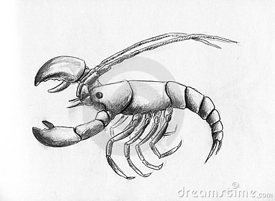 Lobster - pencil drawing