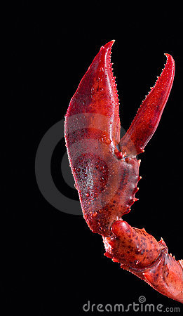 Free Lobster Pincer Stock Images - 2922344